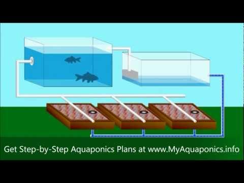 DIY Aquaponics | Do It Yourself Aquaponics Systems | Starter Kit