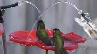 Quick Clips - Hummingbird Playground Fountain 12/9/2016
