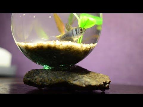 Аквариум из лампочки своими руками