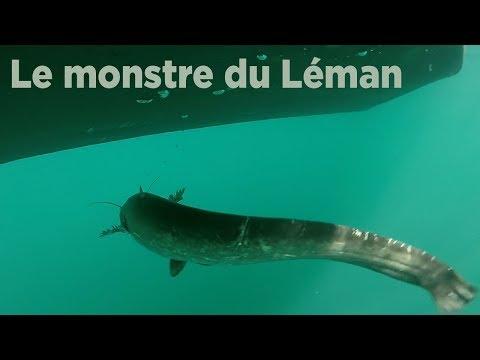 Le monstre du Léman