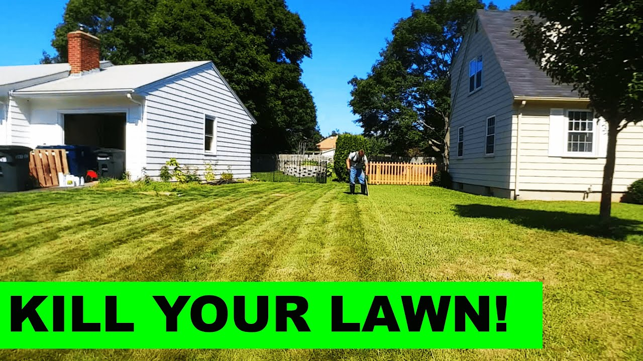 how to add grass to your lawn