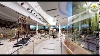 zoological museum متحف الحيواني بحديقة الحيوان بالجيزة