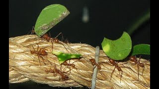 Estas hormigas trabajan mejor que tú