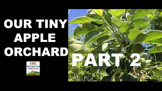 Video Our Tiny Orchard Series - Part 2 - Gravel Pad for Shed download MP3, 3GP, MP4, WEBM, AVI, FLV Juli 2018