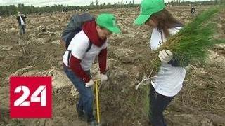 Скачать В Подмосковье прошла экологическая акция Quot Наш лес Посади свое дерево Quot Россия 24
