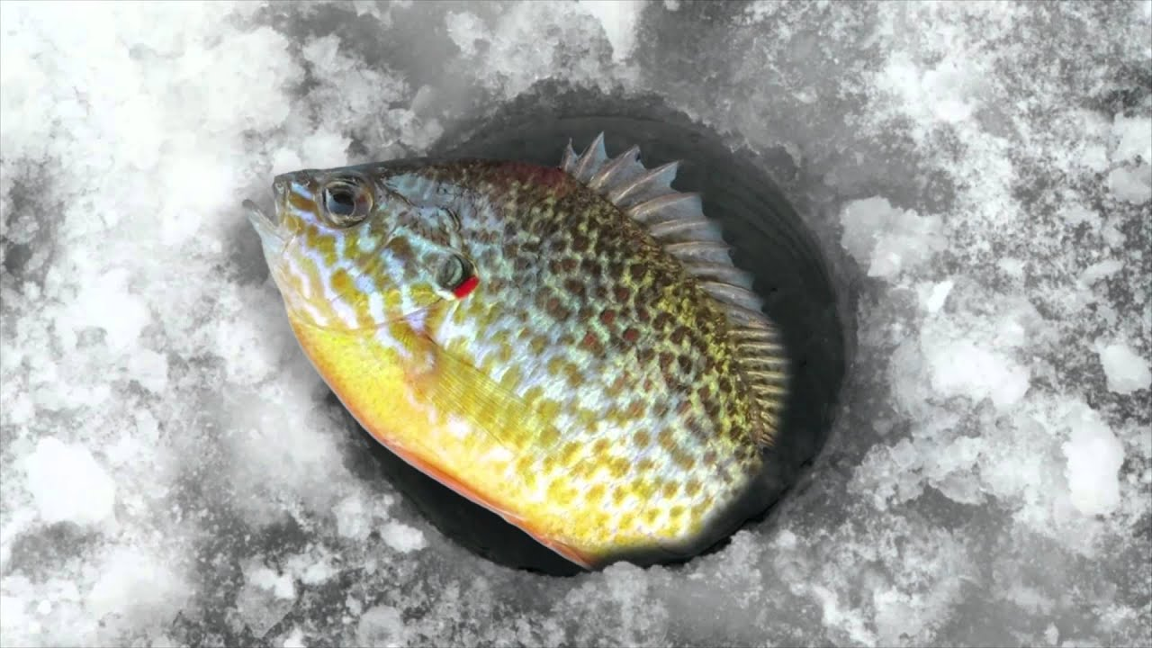 Let 39 s go ice fishing youtube for Go ice fish