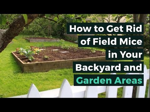 How to Get Rid of Field Mice in Your Backyard and Garden ...