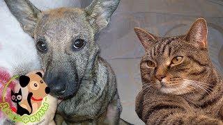 Демодекоз у собак, симптомы и принципы лечения