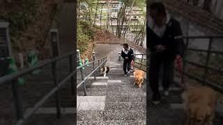 こんな神社の階段もなんのその!元気いっぱい!