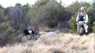 Forensic Dogs Search Tule Wind Site In Mccain Valley