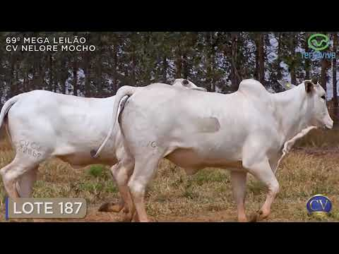 LOTE 187