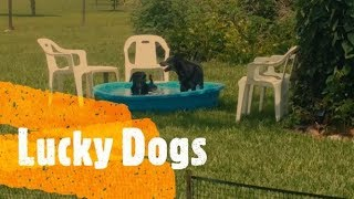 2018 Garden Slideshow and Puppy Pool Party