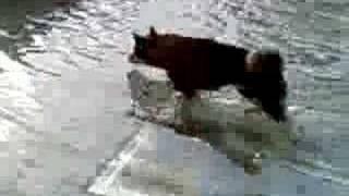 水中歩行を満喫@噴水♪♪ 最後はケータイに飛びかかってきました^^ BGM...