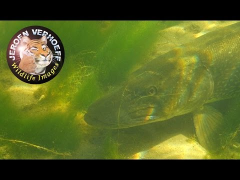 Fresh water Holland showreel 2014