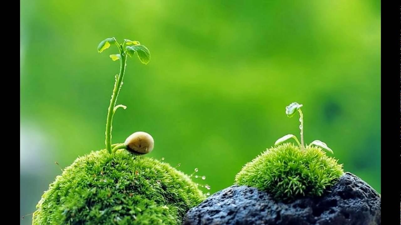 Tổng hợp những bức ảnh thiên nhiên đẹp nhất thế giới