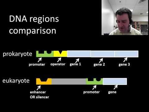 Eukaryotic regulation of gene expression