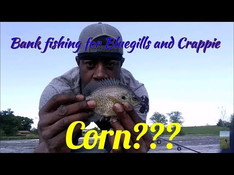 bank-fishing-for-bluegill-and-crappie-with-corn???