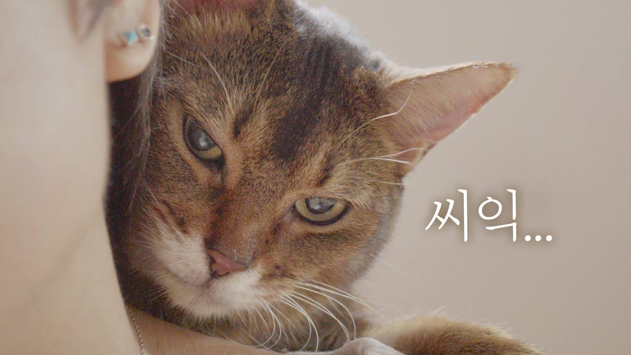 마일로에게 등을 보이면 안 되는 이유 🌚 (feat.어화둥둥)
