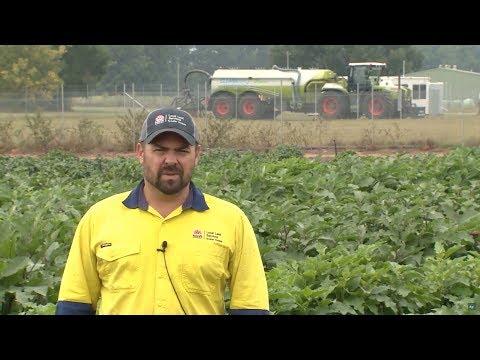 The Sydney Vegetable Demonstration farm