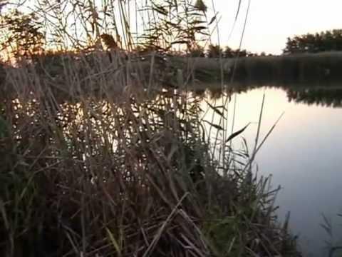 ловля карпа сазана амура в июне в краснодарском крае