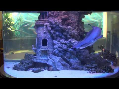 Кормление акулы в салоне «Аква Лого на Тропарёво»