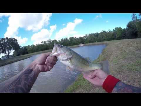 Quick bass raid on Centennial Park!