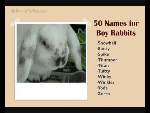Names For Boy Rabbits 50 Great