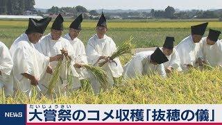 大嘗祭のコメ収穫「抜穂の儀」