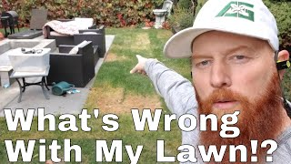 DIY How to kill grub worms. brown spots grass pulling out. How to treat grubs. My lawn has grubs