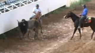 toros coleados en las ferias internacionales de san juan de los morros