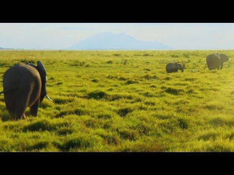 Safari en Kenya (Masai Mara, Amboseli, Lagos Nakuru y Naivasha)