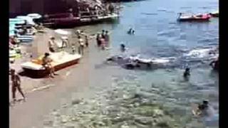 Spettacolo - marina d'albori