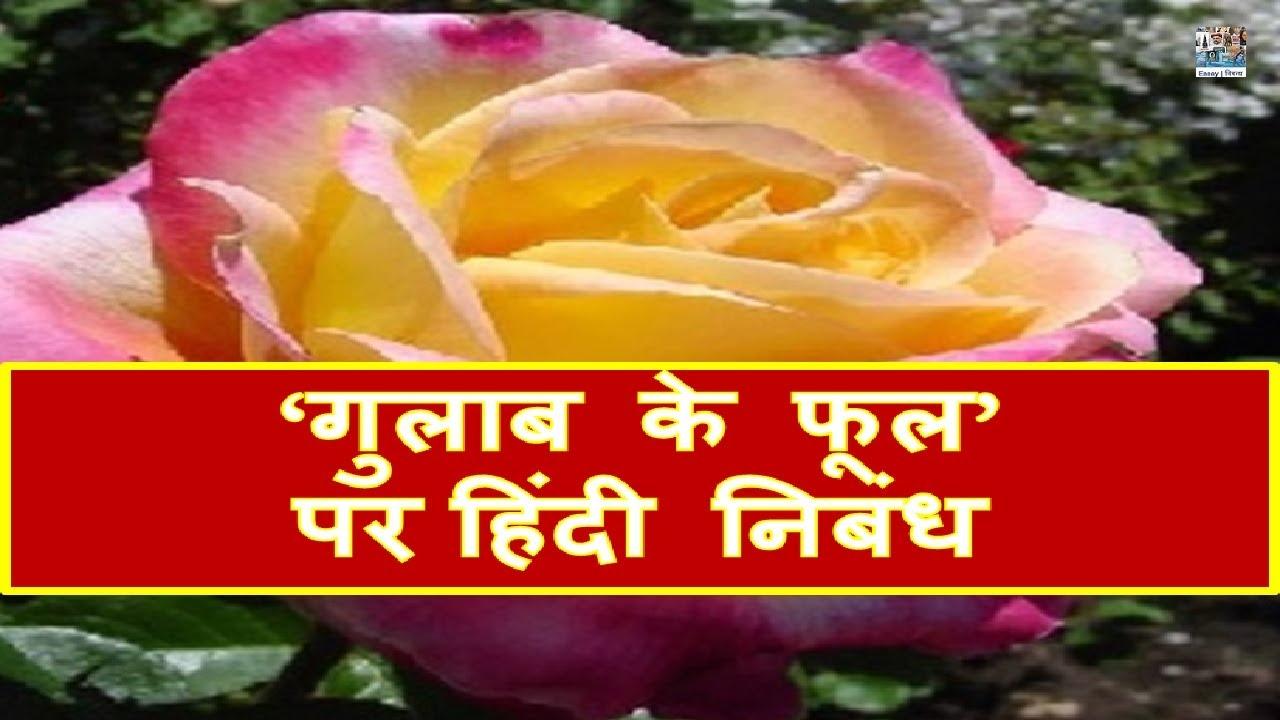 Hindi Essay on ' Rose' | 'गुलाब का फूल' पर निबंध
