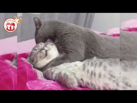 FUNNY CATS of 2019 – Laugh at FUNNY VIDEOS | Tik Tok Cat