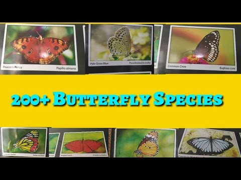 200+ BUTTERFLIES SPECIES, Butterflies, Butterflies scientific names,