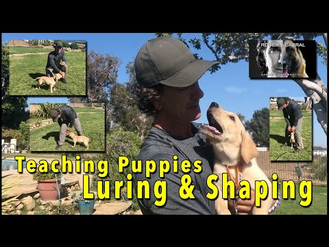 HELP Your PUPPY with OBEDIENCE by Using Luring and Shaping Movements SIMPLE TRAINING