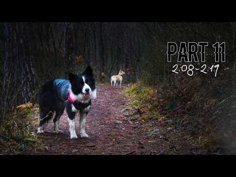 [OPEN] BE FREE 🐾 DSLR Dog MEP | LAST OPEN PART!