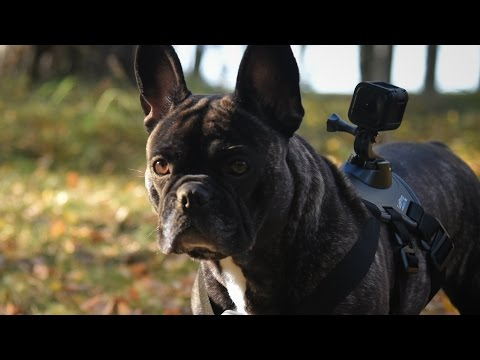 GoPro Hero4 Session + Fetch Dog Harness - Unboxing and Test