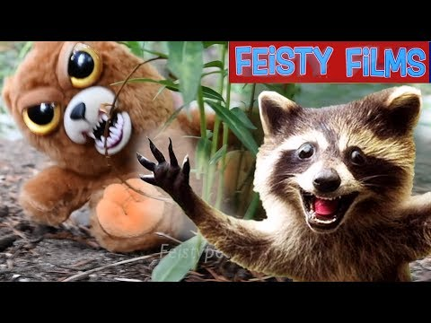 Insane Feisty Nature Compilation! (vol. 1)