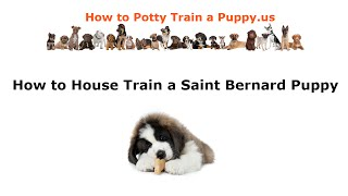 How To House Train A Saint Bernard Puppy