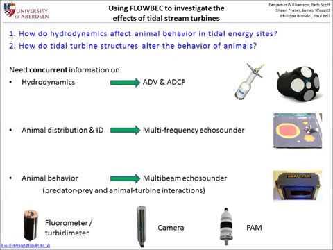 Expert Forum #5: Environmental Monitoring Around Turbines