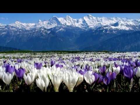 Весенние цветы прекрасны слайд шоу