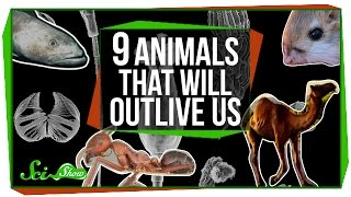 9 Animals That Will Outlive Us