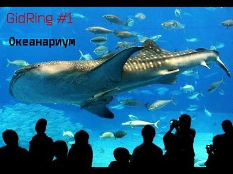 ГидRing #1- Океанариум РИО!