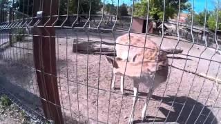 Небольшой зоопарк в Бахчисарае.(Поездка в Бахчисарай. Крым 2015. Небольшой зоопарк в Бахчисарае 2015., 2016-01-08T10:26:53.000Z)