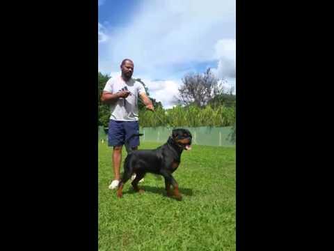 Tito Doc Black Champion - Mult v1
