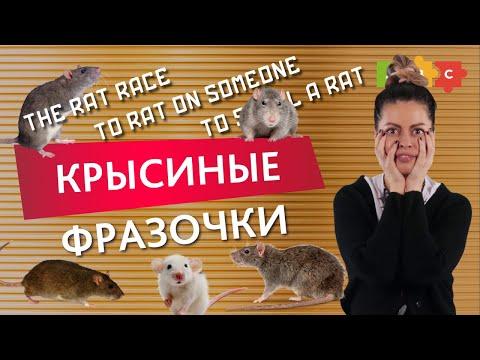 Не закрысили и делимся интересными выражениями со словом Rat