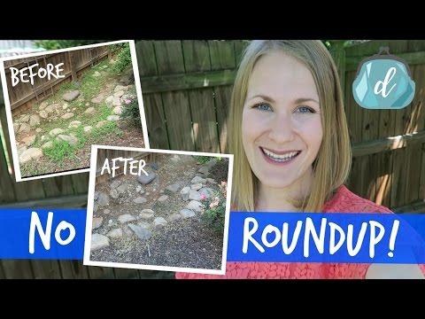 All-natural weed killer (no more Roundup!) 🌱