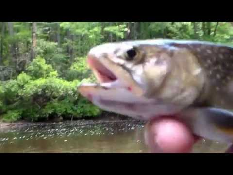 Chattooga River Hike And Trout Fishing Part 2