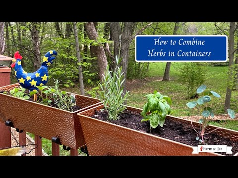 Container gardening in Zone 4 with herbs for cooking
